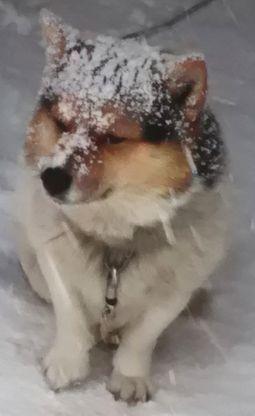 ポンちゃん、雪